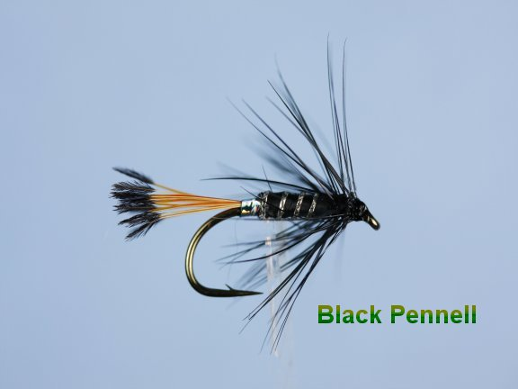 Black Pennell Hackled Wet